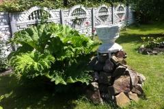 А вот и сама Гунера Мониката - фантастической величины очень шершавые листья