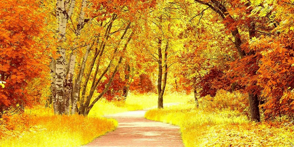 ЛИСТОПАД  Листопад… Кружляє дощ листяний,  Сповнений осінньої журби.