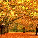 ПОСЛЕДНЯЯ ОСЕНЬ Октябрь зажегся в старом парке, И словно искорки огня, Слетают листья, шелестя,