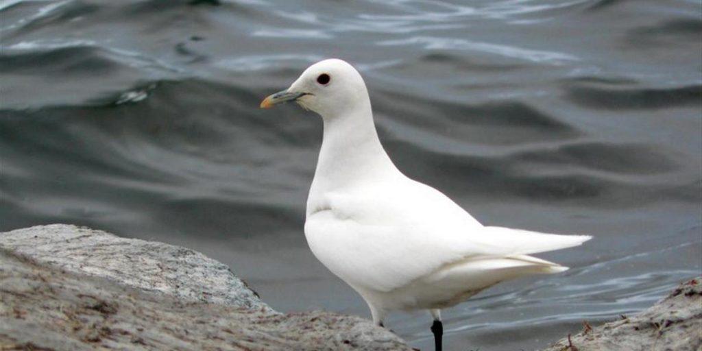 СОНЕТИ МОРЯ Як біла чайка з стогоном і криком До моря лагідного палко припадає,