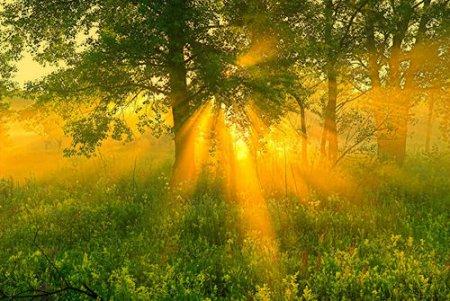 Стих «Утро»