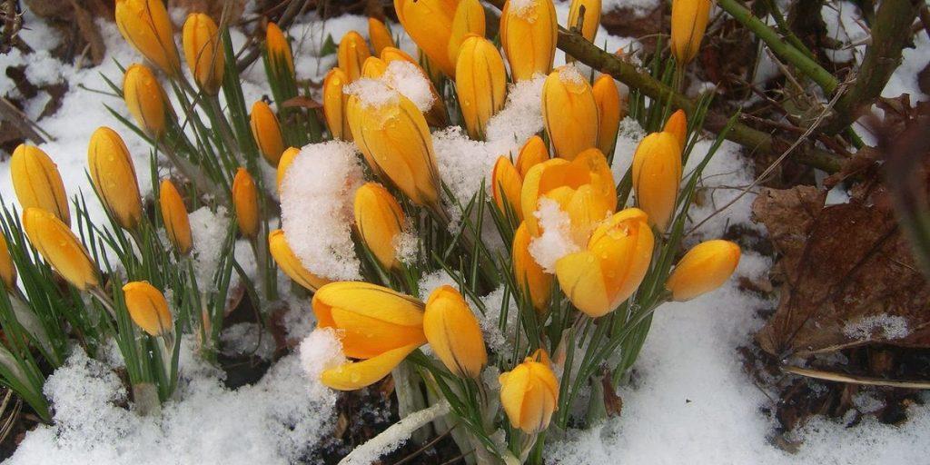 Весна Далеко-далеко, в голубых небесах, Еще пахнущих долгой зимой,
