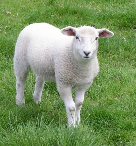 Притча про доброго пастиря
